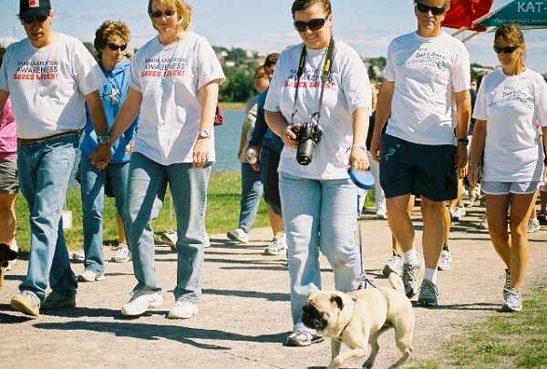 Bella the dog leading the 2009 KAT-Walk